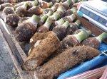 Journ e racines et tubercules en martinique transfaire for Chambre d agriculture martinique